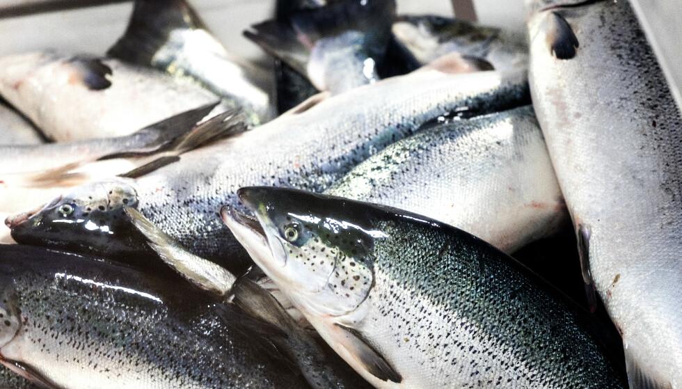 NY REKORD: Norge eksportere sjømat for rekordsum i 2019. Foto: Gorm Kallestad / NTB scanpix