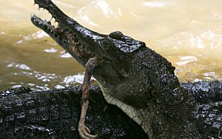 Presidentens krokodiller terroriserer hovedstaden