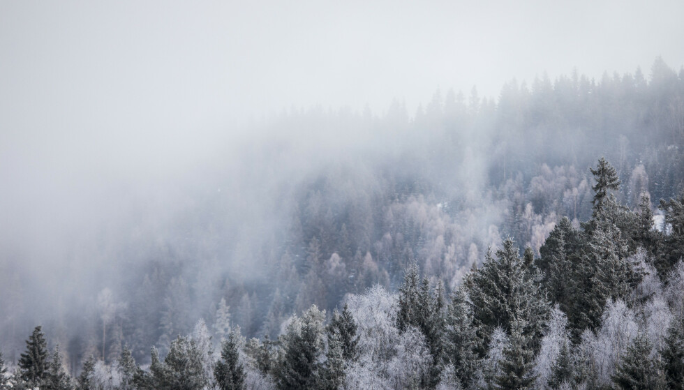 <strong>REAGERER:</strong> Arbeiderpartiet reagerer på at Statskog selger store skogområder, og at de ikke vil opplyse hvem som kjøper dem. Arkivfoto: Tore Meek / NTB scanpix