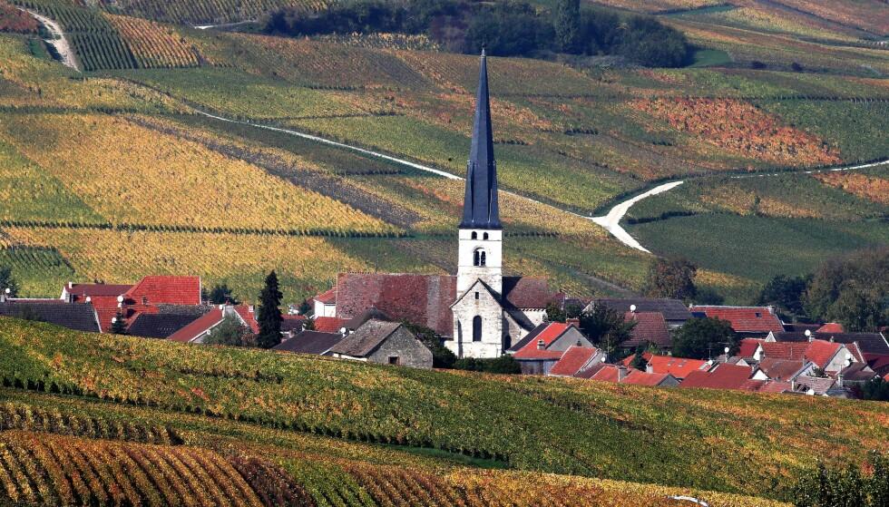 <strong>HARDT RAMMET:</strong> Franske vinprodusenter er hardt rammet av tollen USA har lagt på europeisk vin. Her er en champagne-vingård utenform Reims. Foto: Francois Nascimbeni / AFP / NTB Scanpix