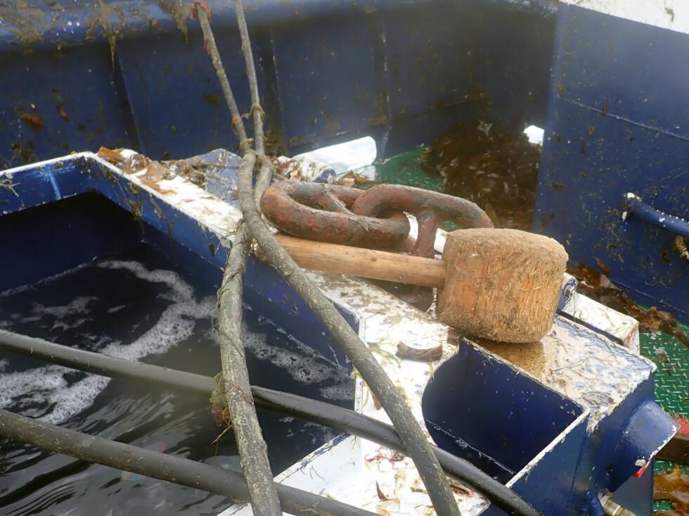 Hammer for knusing av krabbe som sitter fast i garn. Foto: Kystvakten