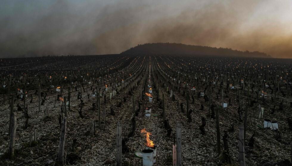 ALVORLIG SKADE: Franske vinbønder tente tusenvis av lys på natta for å motvirke fryste vinstokker. Foto: NTB / JEFF PACHOUD / AFP