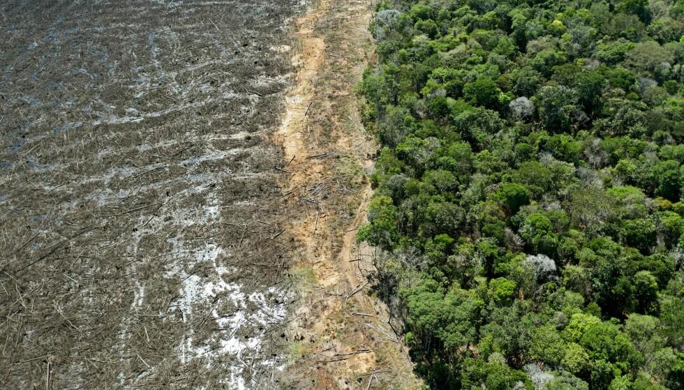AVSKOGING: Dette bildet tatt i august 2020 viser et avskoget område av Amazonas nær Sinop, i delstaten Mato Grosso. Foto: Florian Plaucheur / AFP / NTB