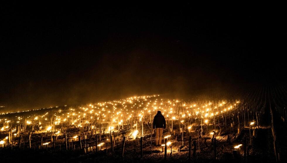 TENNER LYS: For å holde varmen i jorda tente mange vinbønder lys om natten for å holde liv i vinprodukasjonen. Foto: Jeff Pachoud/ AFP/NTB.