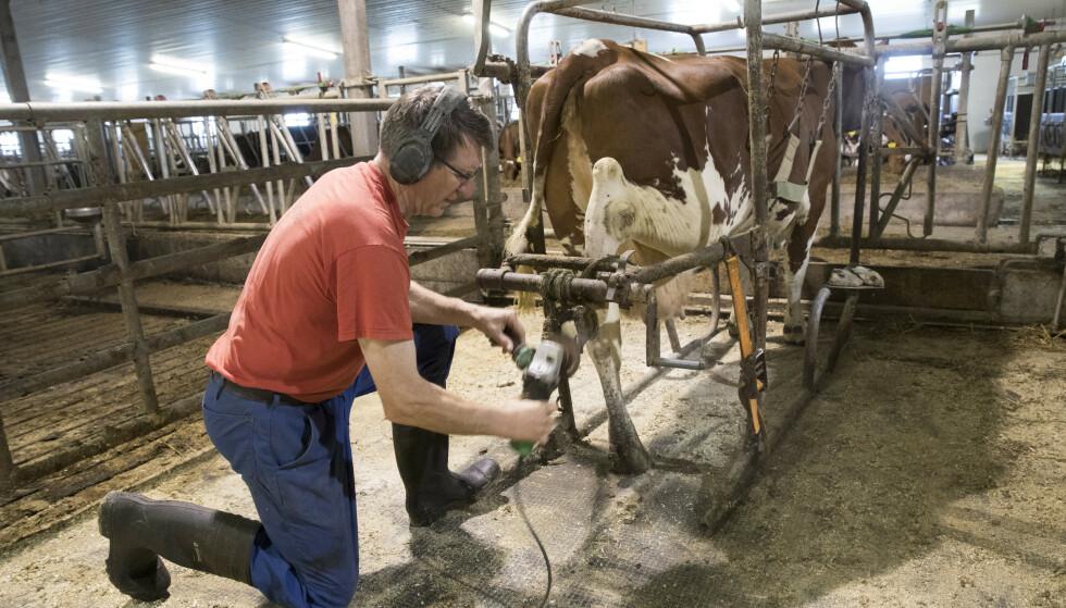 OMLEGGING: Unge Venstre ønsker å redusere og på sikt fjerne landbruksstøtten. Ifølge en BI-studie er støtten 600 000 kroner per årsverk. Illustrasjonsfoto: Terje Bendiksby / NTB