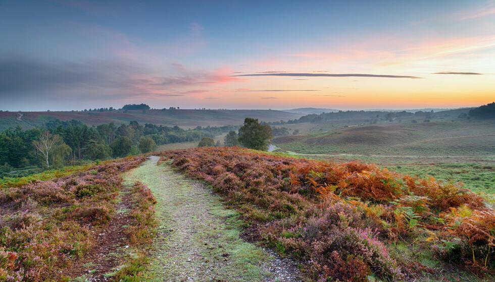 SNAUT: Mens Norge har 37 prosent av landet dekket av skog, har Storbritannia bare 13 prosent. Nå skal det plantes for fullt. Her fra New Forest National Park sør i England. Foto: Shutterstock / NTB