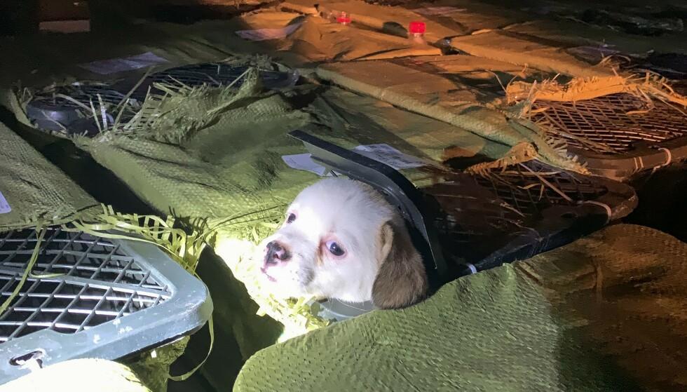 RYSTENDE TREND: Organisasjonen Love Home og CNN hevder at valper og kattunger i Kina sendes i forundringspakker. Foto: Chengdu Aizhijia Animal Rescue Centre / AFP / NTB