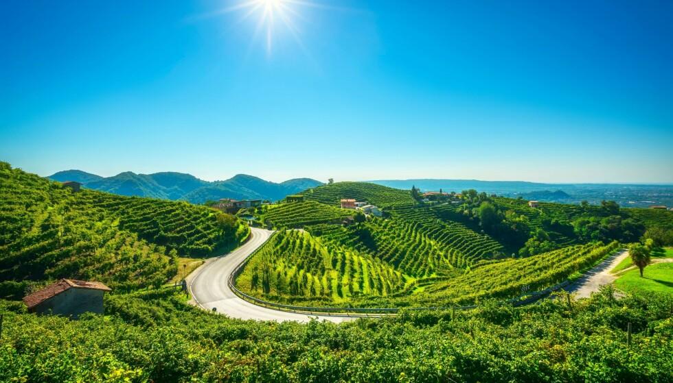 VERDENSARV: Valdobbiadene i Veneto, Italia er en del av Unescos veredensarvsliste. Området kalles Prosecco Hills. Foto: Stevan ZZ / Shutterstock / NTB